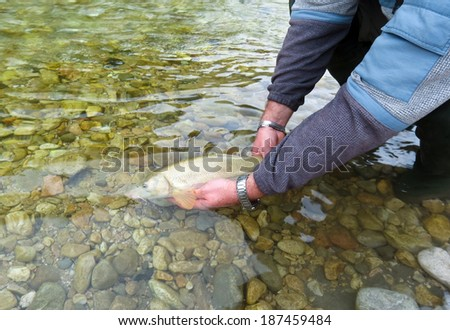 fish being released  - stock photo