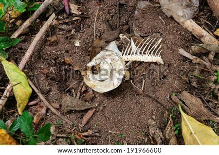 Fish bone on the floor - stock photo