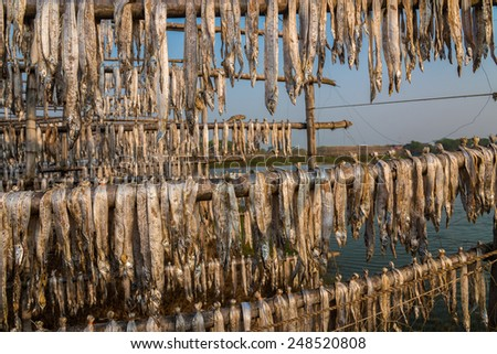 Fish caught in sea being dried by hanging on bamboo poles at a fishing industry in Digha, West Bengal, India
