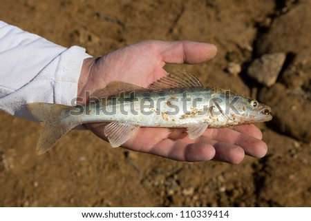 fish caught in the hand