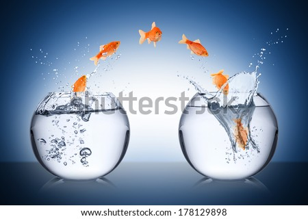 fish change concept - stock photo