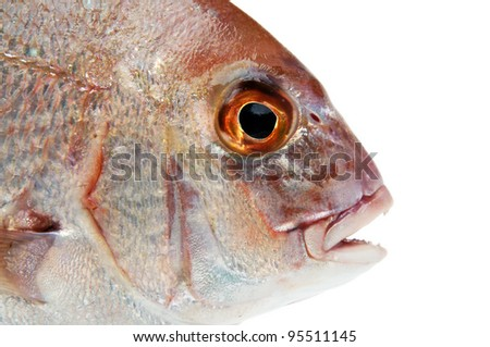 fish closeup over white background