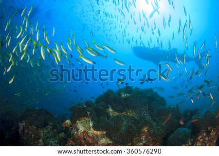 Fish coral reef whale shark in background - stock photo