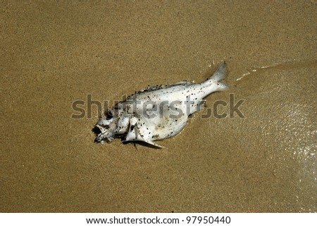 fish dead death on the beach for concept and design - stock photo