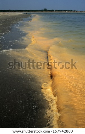fish die-off water pollution and aquatic organisms - stock photo