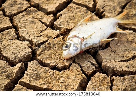 fish died on cracked earth / drought / river dried up /famine / scarcity / global warming / natural destruction / extinction - stock photo