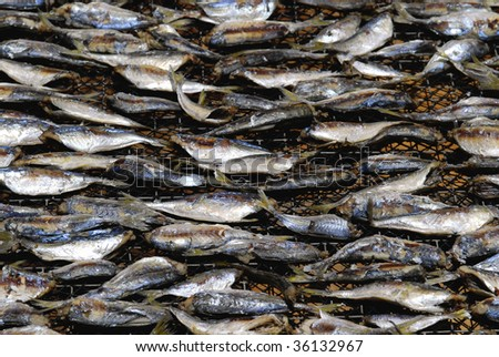 Fish drying in a fishing village in rural Hong Kong - stock photo