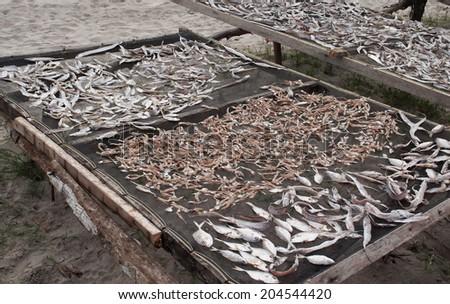 Fish drying on Tiku beach. Sumatra. Indonesia - stock photo