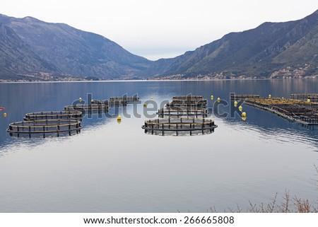 Fish farm in the Bay of Kotor. Montenegro - stock photo