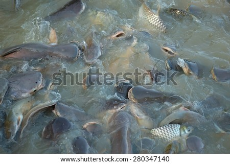 Fish farming - stock photo