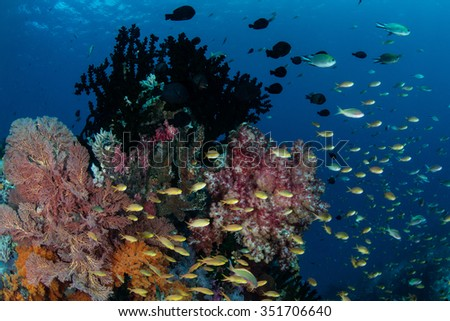 Fish feed on plankton above a colorful coral reef in Raja Ampat, Indonesia. This tropical region is known for its array of marine biodiversity and exceptional diving and snorkeling opportunities.