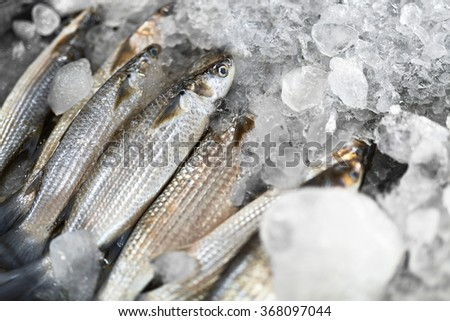 Mullet fish stock images royalty free images vectors for Eating mullet fish
