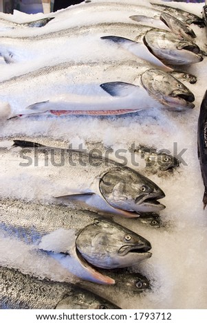 Fish for sale at the market - stock photo