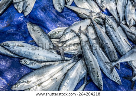 Fish.... fresh from the sea. Ready for processing to become salty fishes. - stock photo