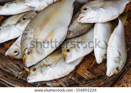 Fish. Fresh seafood in market. Background. - stock photo