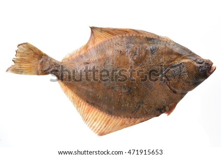 Fish halibut