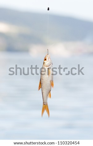 fish hanging on a hook on a background of water - stock photo