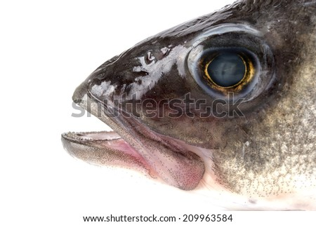 Fish head isolated on white background. close-up - stock photo
