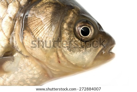 how to clean fish head