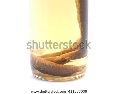 fish in a glass jar on a white background
