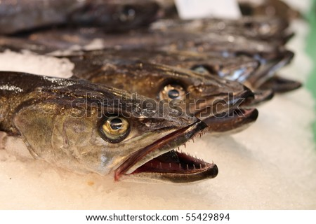 Fish in a row at the market - stock photo