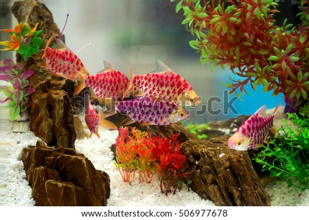fish  in a tropical fish tank with many plants