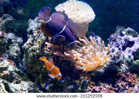 Fish in aquarium - stock photo
