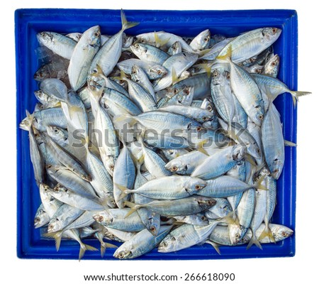Fish in blue box isolated on white background - stock photo