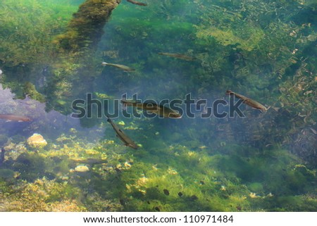 fish in spring water