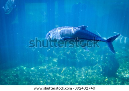 Fish in the blue water of the ocean