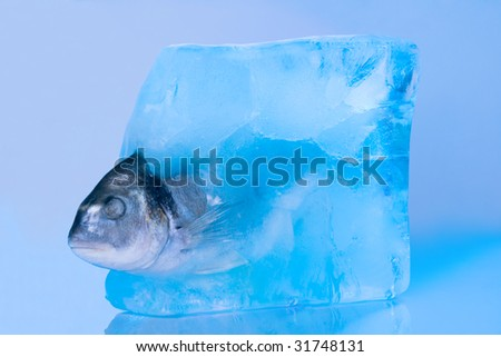 fish in the ice - stock photo