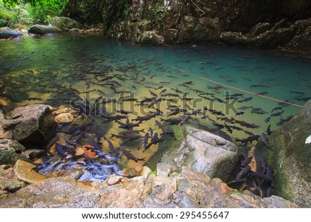 fish in the river at waterfall