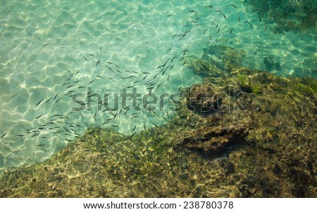 fish in transparent water abstract