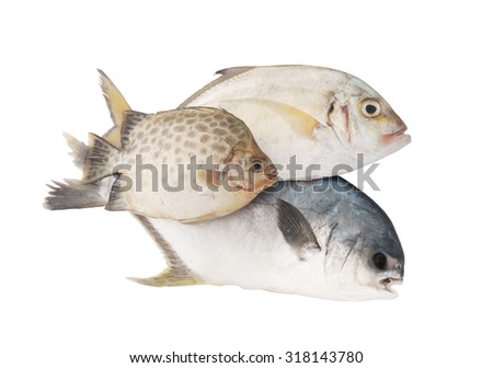 Fish isolated on the white background, seafood concept - stock photo
