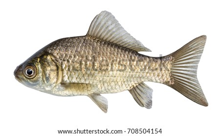 Fish head stock images royalty free images vectors for Fish with scales and fins
