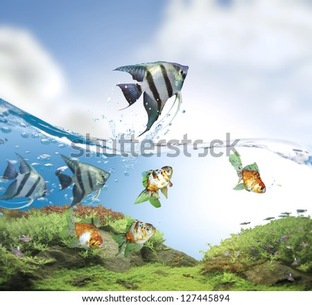 Fish jumping good concept for Recklessness and challenge concept - stock photo