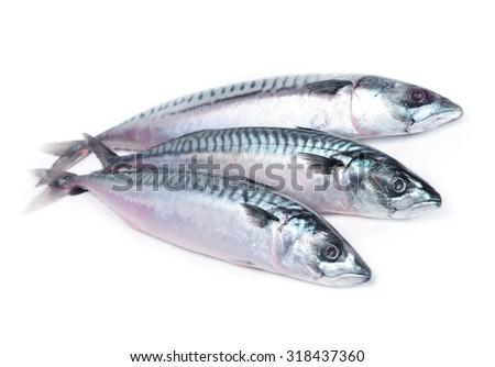 Fish mackerel - stock photo