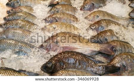 Fish market - stock photo