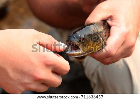 Big mouth bass stock images royalty free images vectors for Big mouth fish