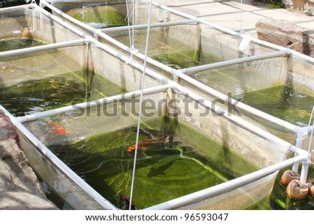 Fish nursery - stock photo