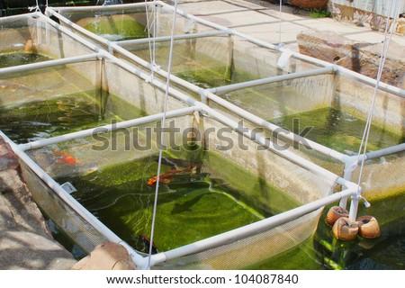 Fish nursery for koi - stock photo