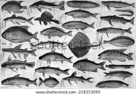 Fish of the Ucayali, vintage engraved illustration. Le Tour du Monde, Travel Journal, (1865). - stock photo