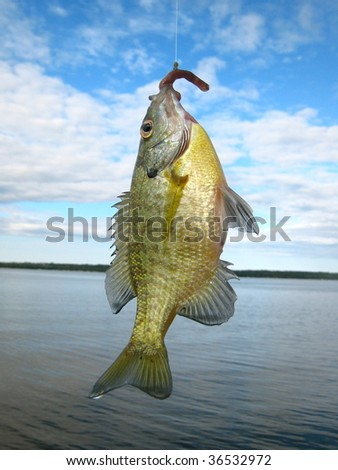 Fish on a hook with blue sky - stock photo
