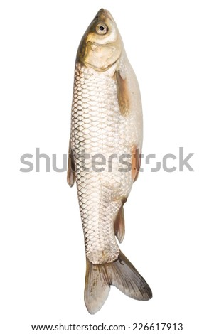 fish on a white background
