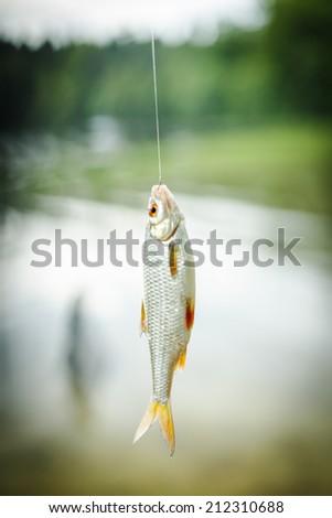 Fish On Hook. / Fish On Hook.  - stock photo