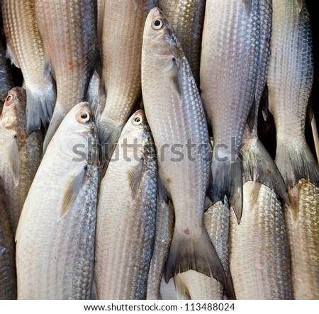 Fish on ice at the fish market - stock photo