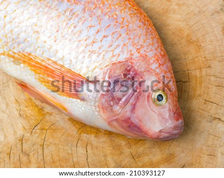 Fish on wood background
