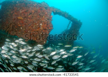 fish on wreck dive - stock photo