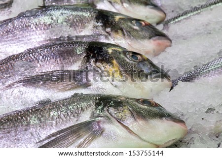 Fish onto ice in market. Macro fish background. Bream fish series. - stock photo