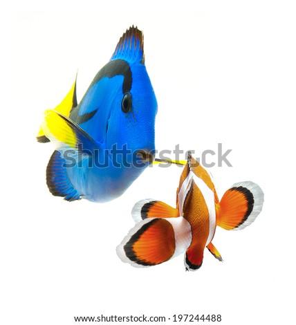fish, reef fish, marine fish party isolated on white background - stock photo